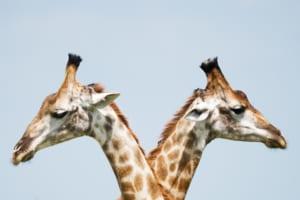 営業プロセスを見える化する2つの方法:ExcelとSFAを徹底比較|Senses.Lab|top