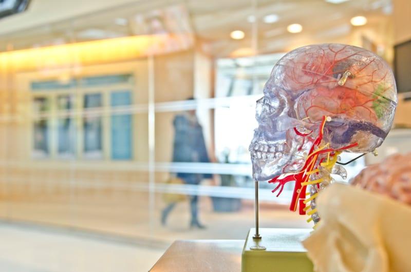 脳科学を使った「ニューロマーケティング」とは?| Senses Lab.|2